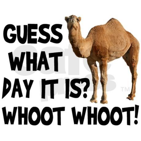 hump-day-camel-www_lovethispic_com_zpsxr9rp6ke.jpg