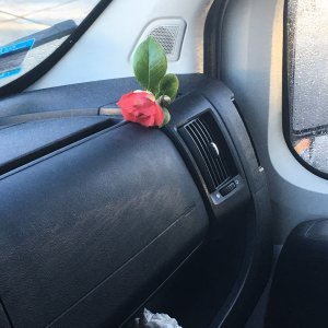 https://mikeysboard.com/threads/flowers-in-the-van.292136